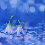 花言葉で「ごめんなさい」の気持ちを届けるのにオススメの花